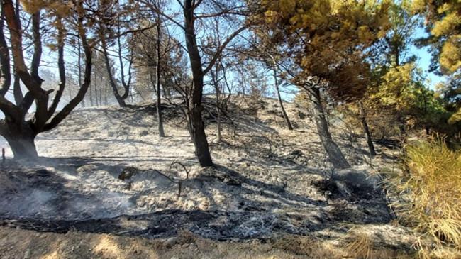 Çanakkale'de 5 ayrı noktada çıkan orman yangını kontrol altına alındı