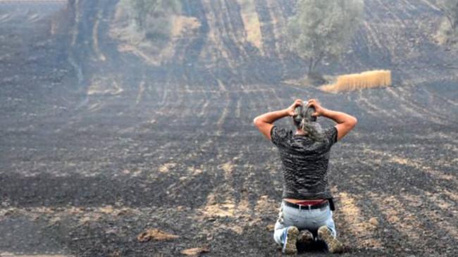 Gelibolu'da tarlaları yanan köylüler, oluşan manzara sonrasında büyük üzüntü yaşadı